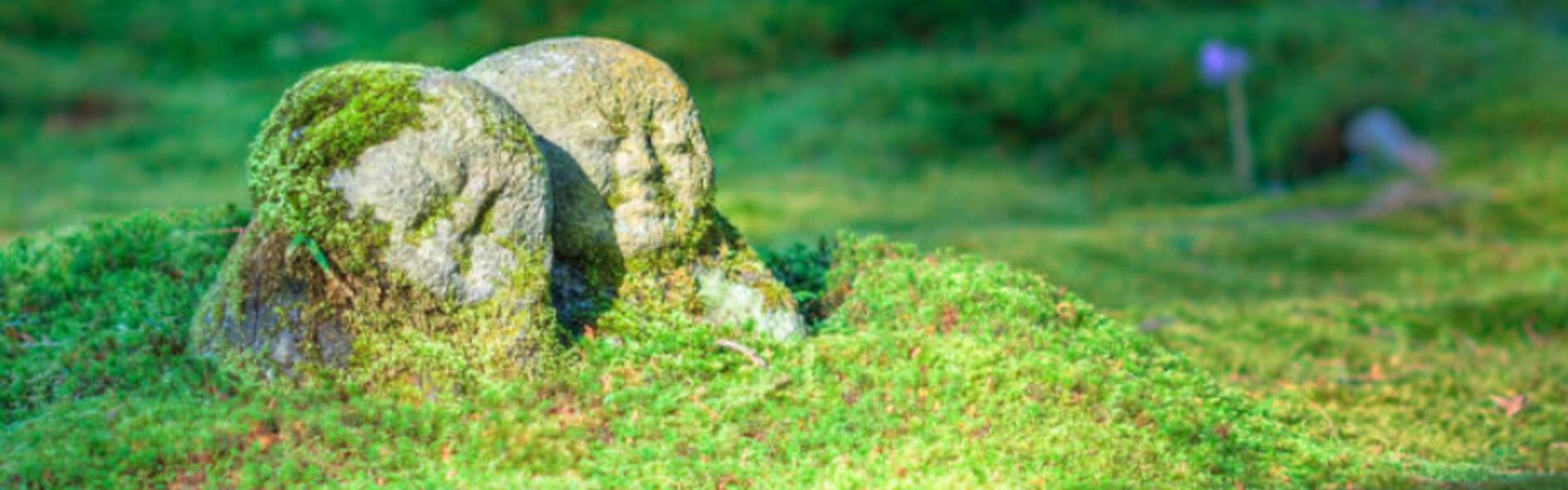 Formazione alla Mindfulness in Relazione