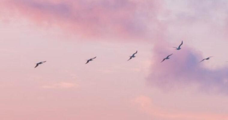 Suoni di guarigione 1 – Una pratica taoista per trasformare l'ansia e la preoccupazione con Anne Overzee